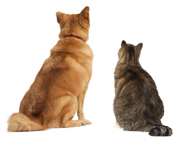 Catanddoglookingup-microchips