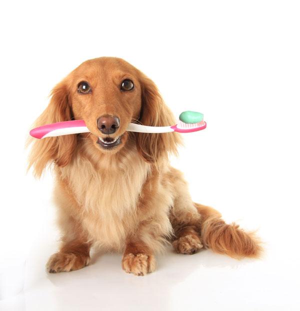 Dogtoothbrush
