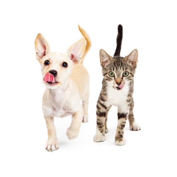 hungrydogandkitten-nutrition